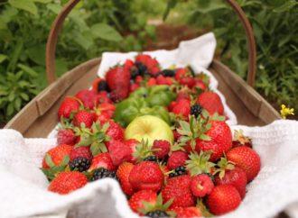 Des paniers de fruits de saison pour améliorer le bien-être des employés