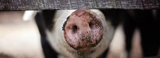 Comment la cuisine des USA dynamise la viande de porc ?