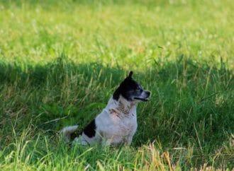 Sécurité en milieu agricole: que faut-il savoir?